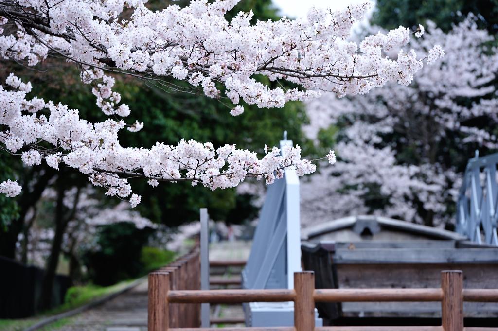 http://www.tuchiya.org/import_from_mt/tuchiya/photos/700_4740.JPG