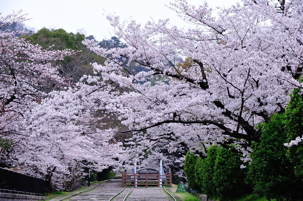 http://www.tuchiya.org/import_from_mt/tuchiya/photos/700_4749.JPG